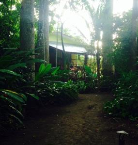 Iguana LodgeCR 3